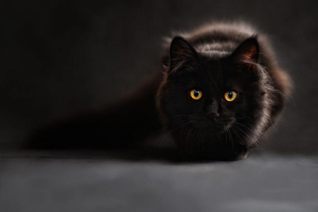 5 rzeczy, które planowałam inaczej: koty