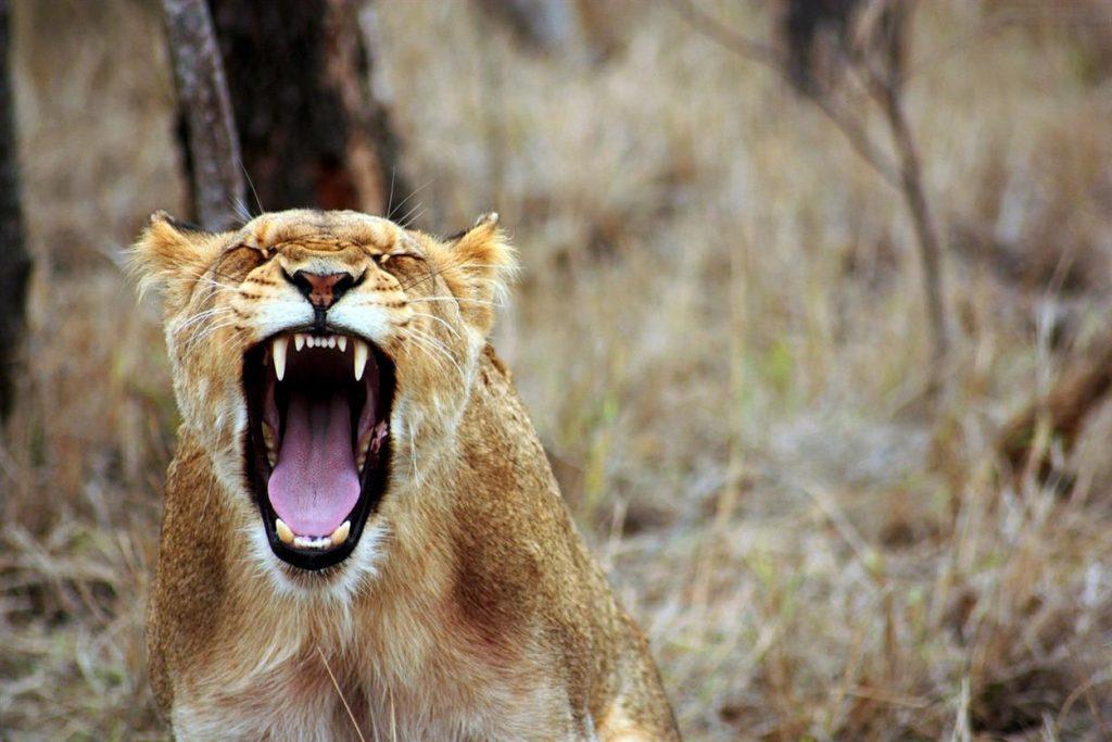 Bezradnik tłumacza: 5 etapów radzenia sobie z krytyką - gniew
